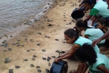15 MIL FILHOTES DE QUELÔNIOS SÃO LIBERADOS NO RIO TOCANTINS